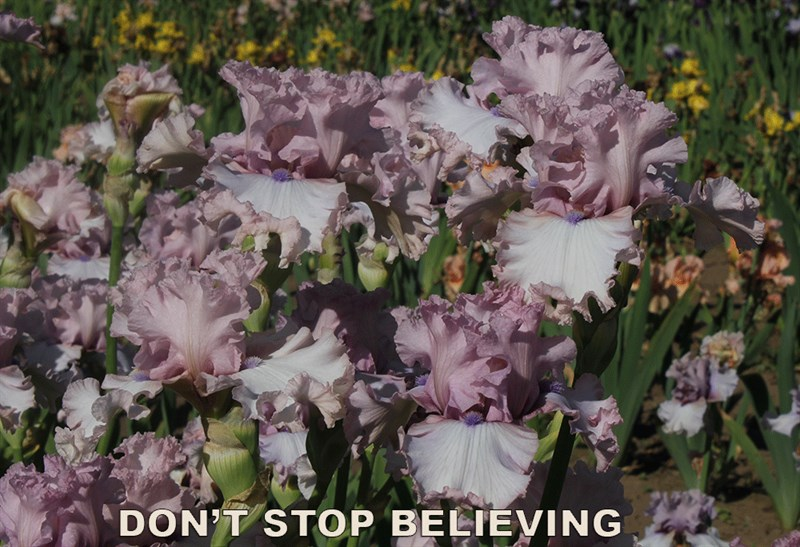 Don'T Stop Believing:Image2