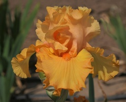 Bring On The Bright