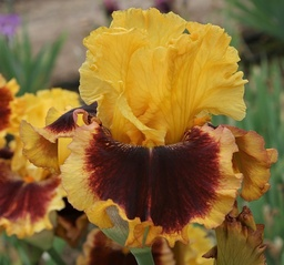 Hey Look Me Over